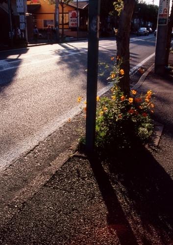 FWtokyu-denentoshiRG004(1).jpg